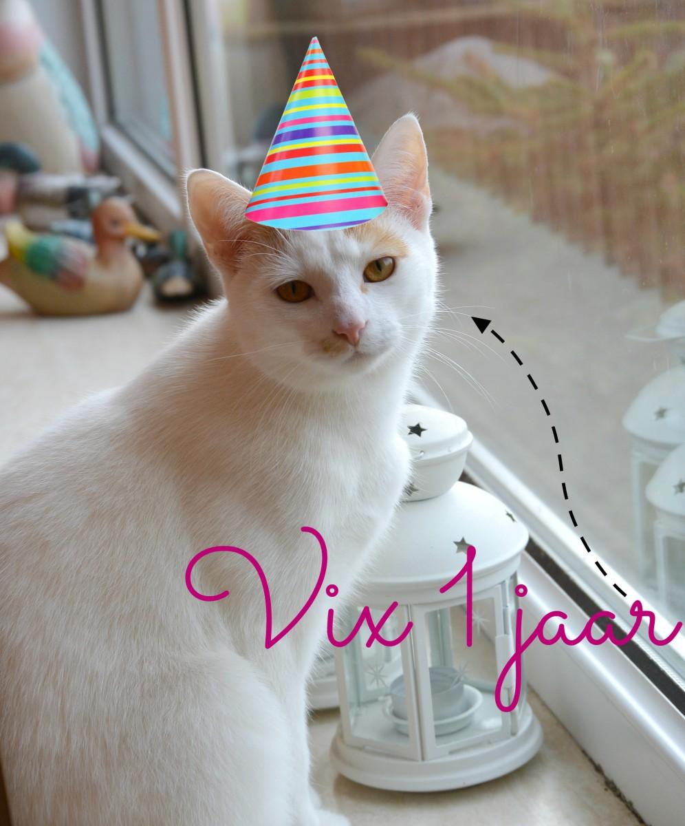 Vix 1 jaar! Van zielige kitten tot stoere kater