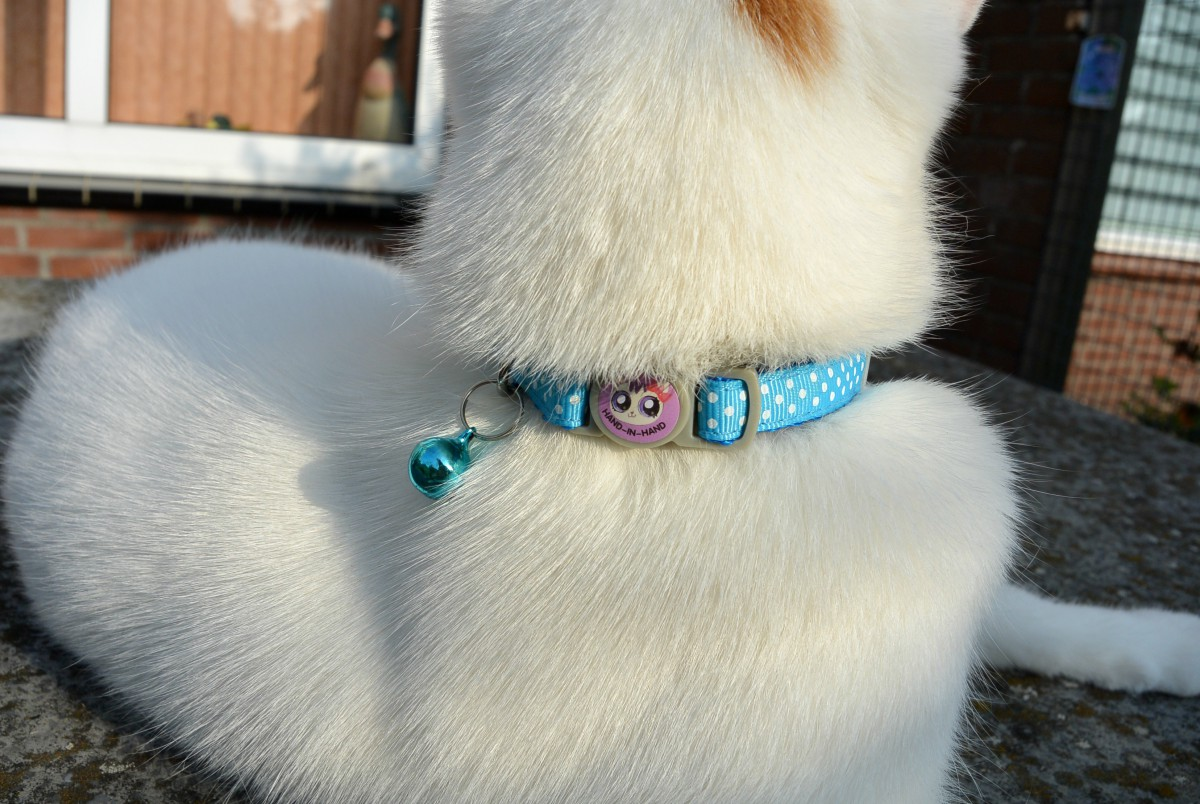 kattenhalsbandjes via aliexpress