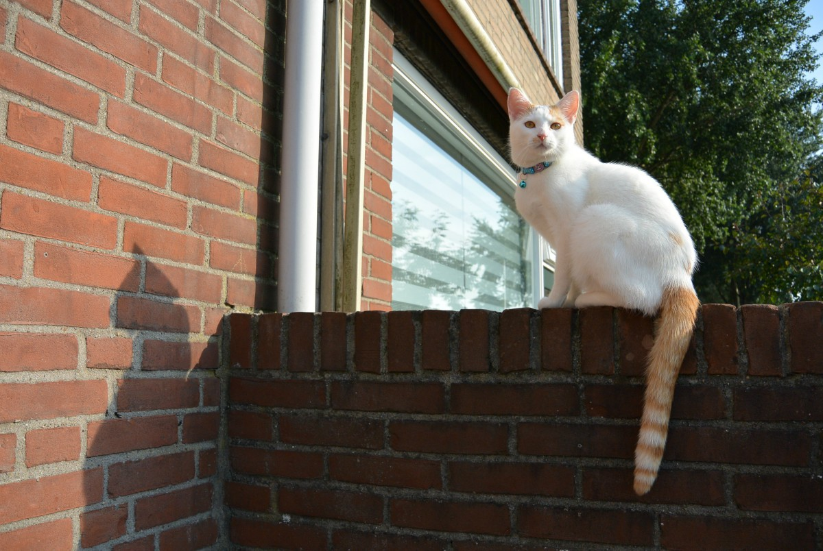 kattenhalsbandjes via aliexpress
