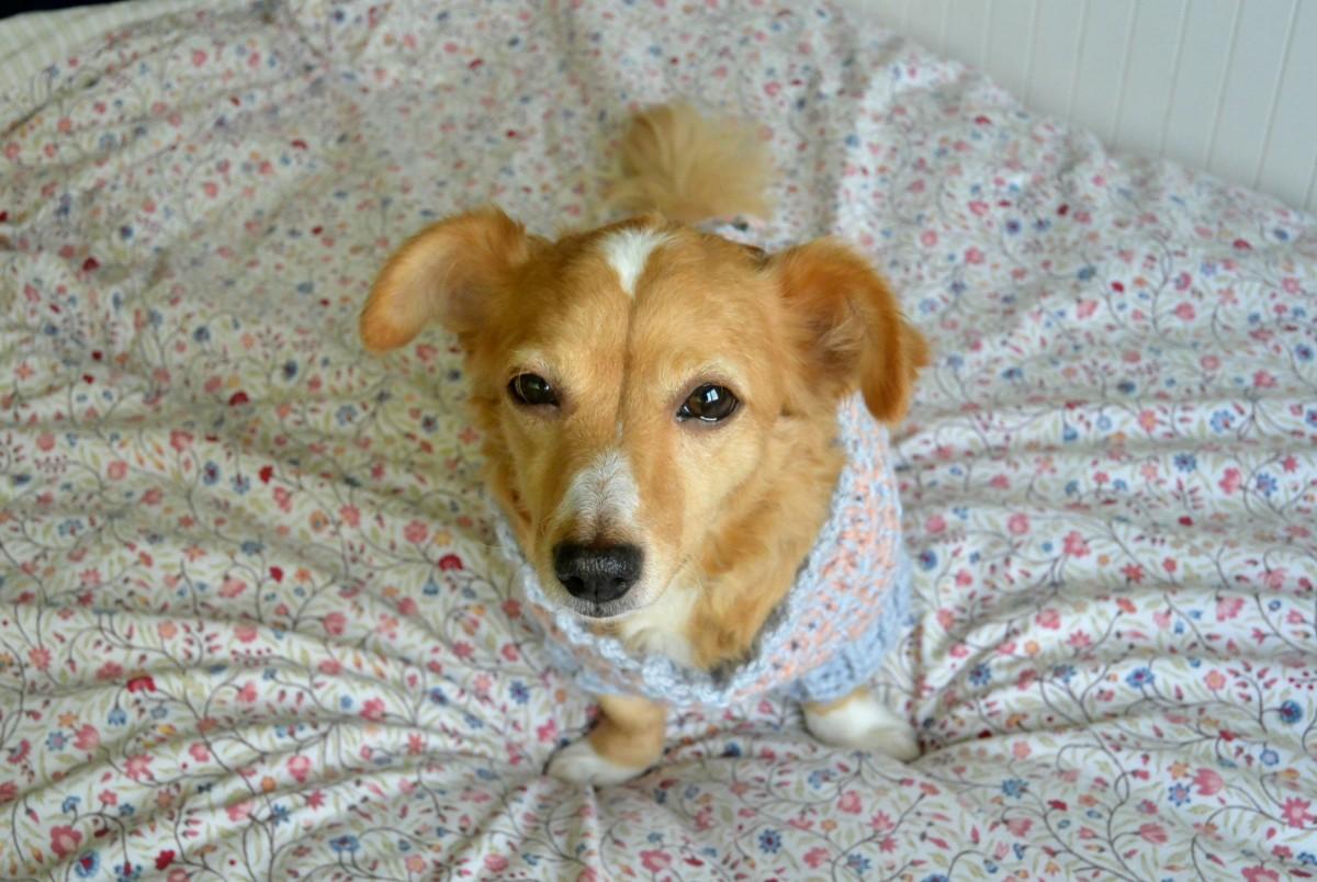 hond adopteren uit het buitenland