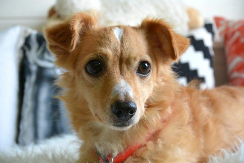Een hond adopteren uit het buitenland