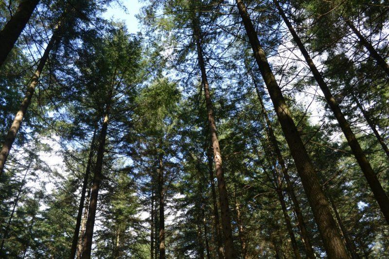 Sfeerimpressie: Een weekje vakantie in Holten