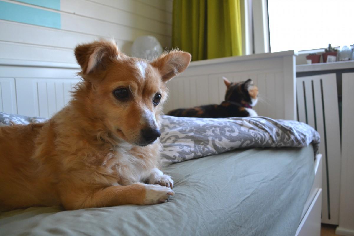een hond adopteren als je al katten hebt