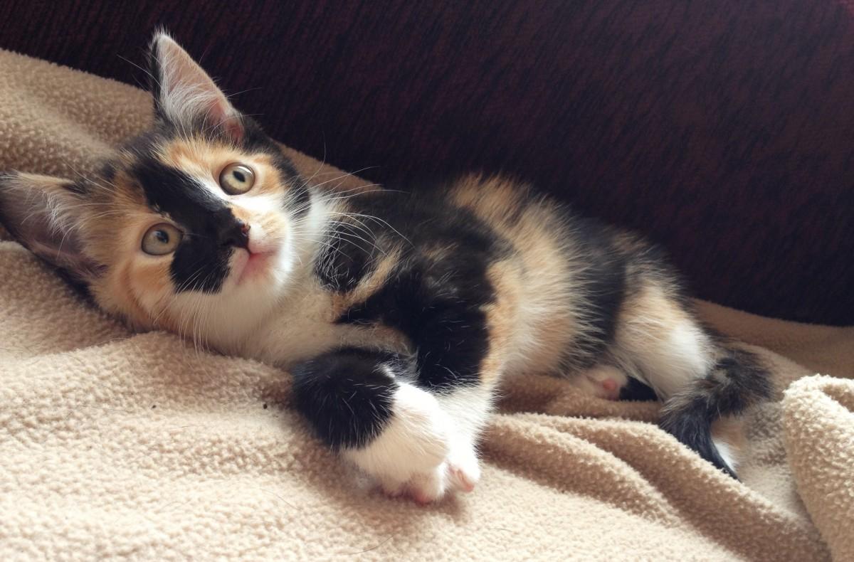 8 tekenen dat je een crazy catlady bent