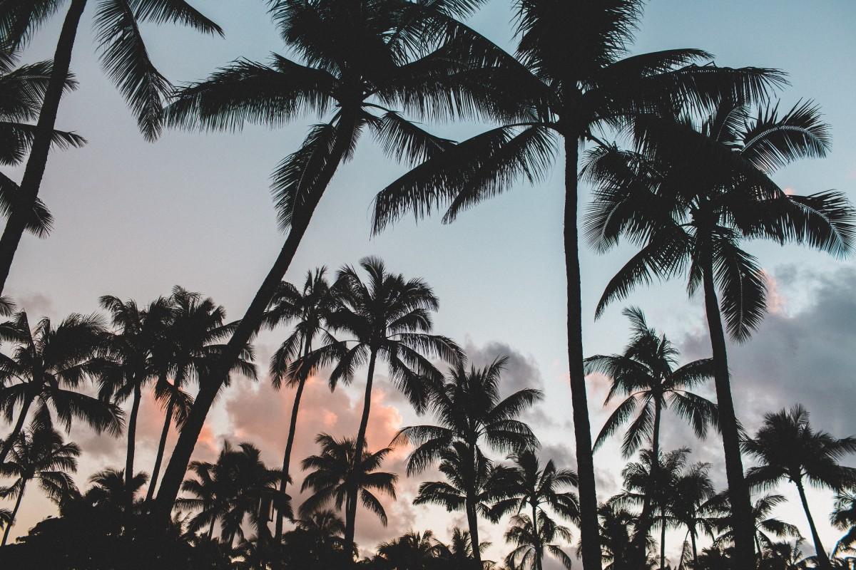 Mijn blog heeft vakantie!