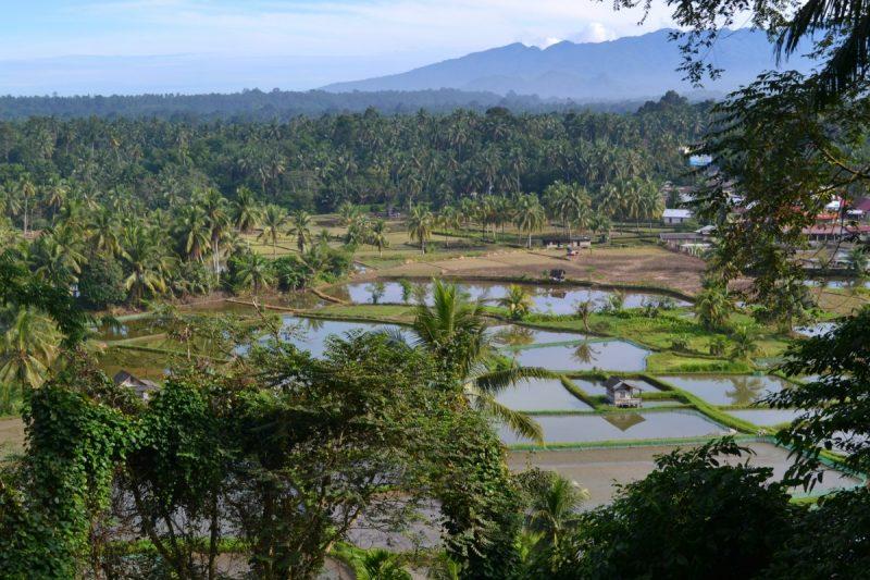Op zoek naar mijn roots in Indonesië